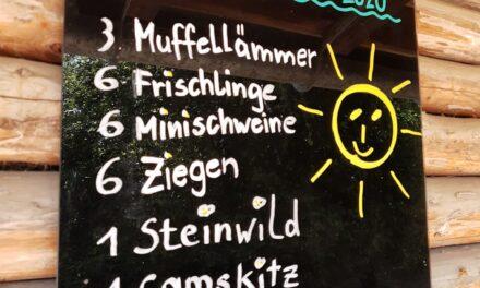Nachwuchs im Wildpark Feldkirch